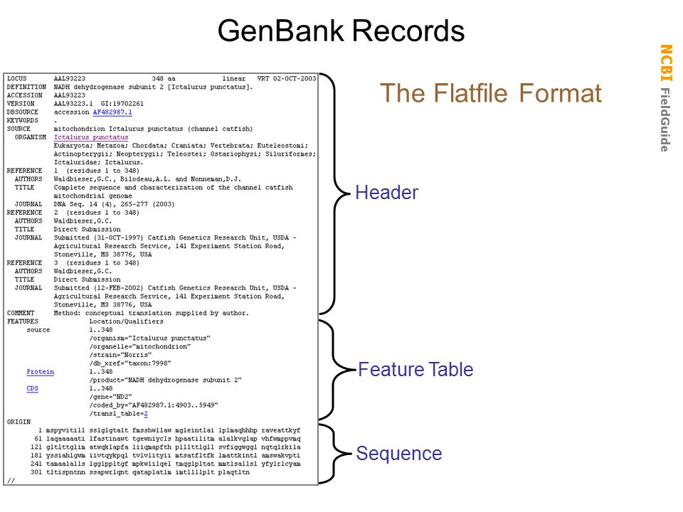 GenBank Records Header The Flatfile Format Feature Table Sequence