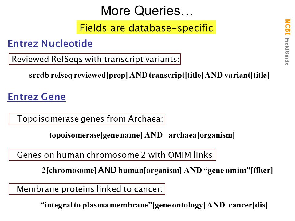 More Queries… Fields are database-specific Entrez Nucleotide