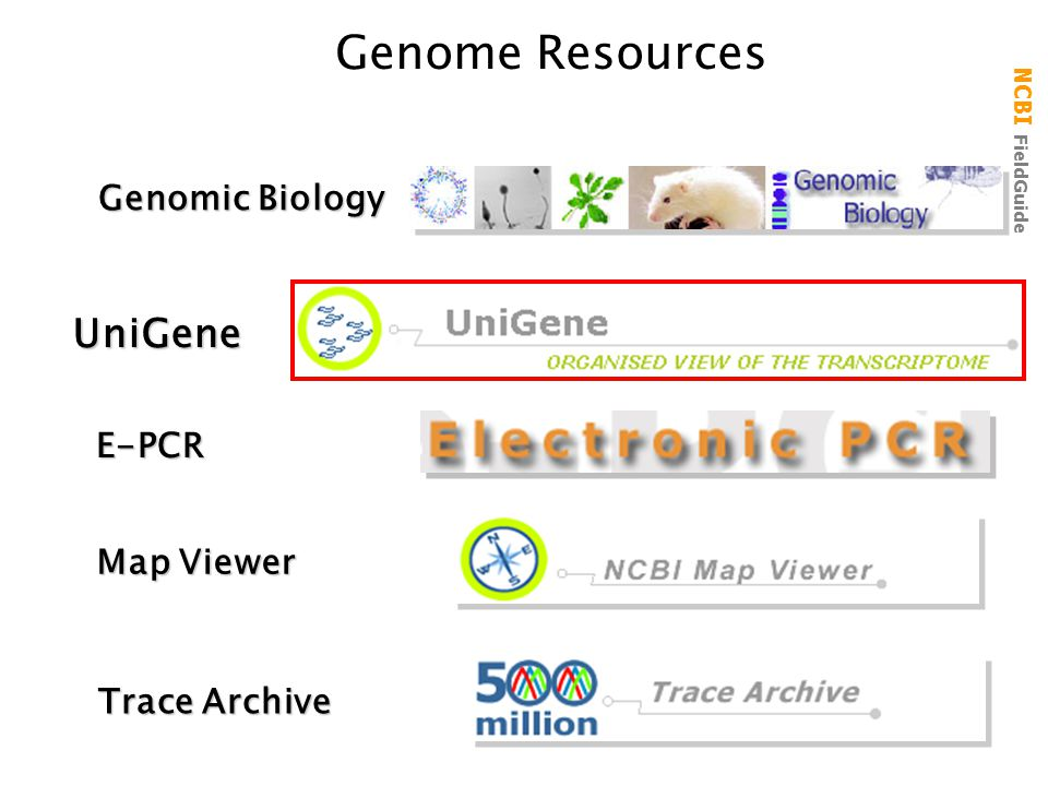 Genome Resources UniGene Genomic Biology E-PCR Map Viewer