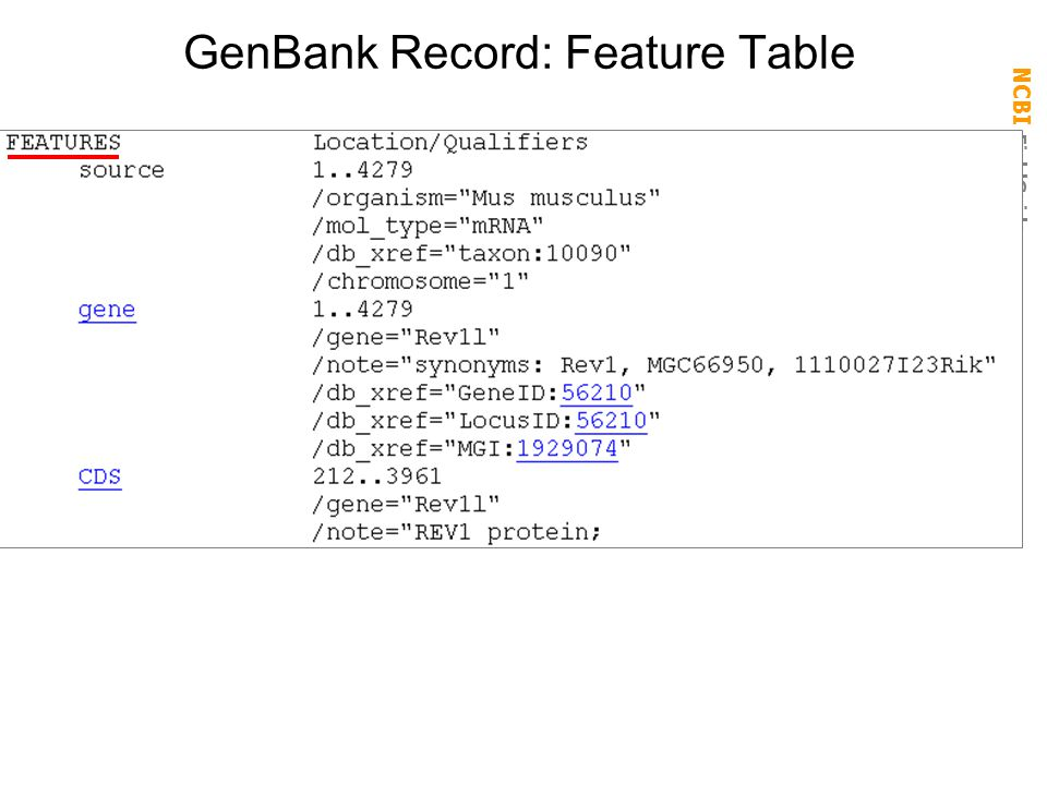 GenBank Record: Feature Table