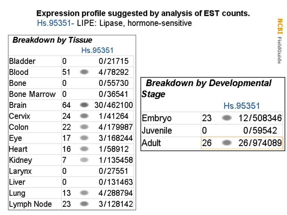 UniGene Cluster Hs.95351: expression