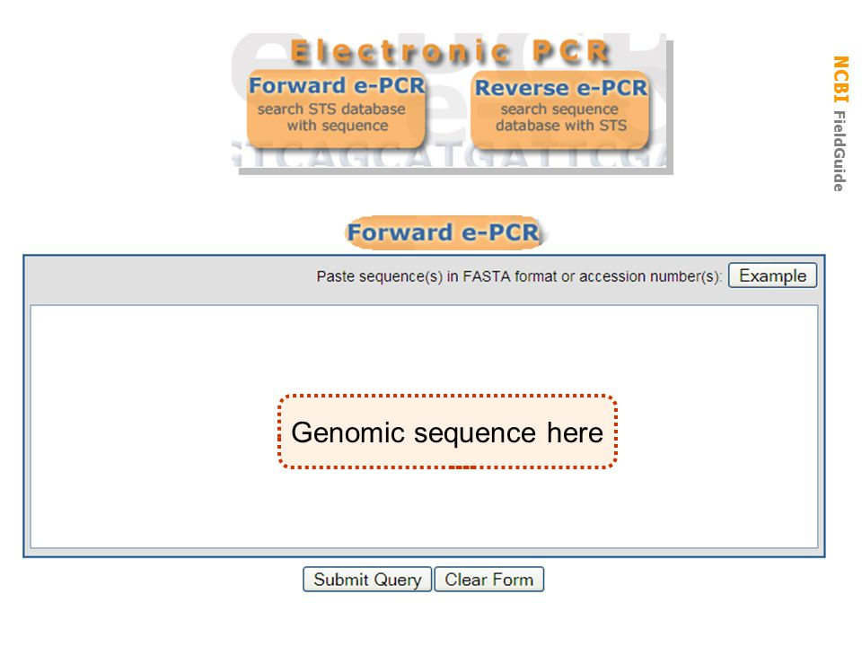 E-PCR Genomic sequence here