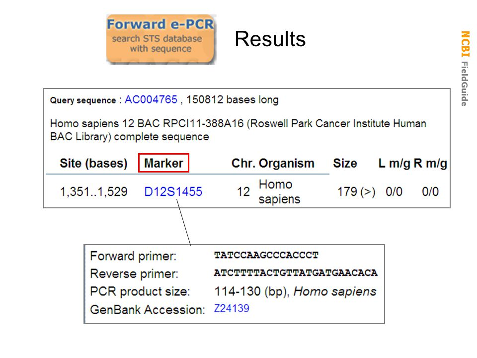 how to get human reverse complement genome sequence