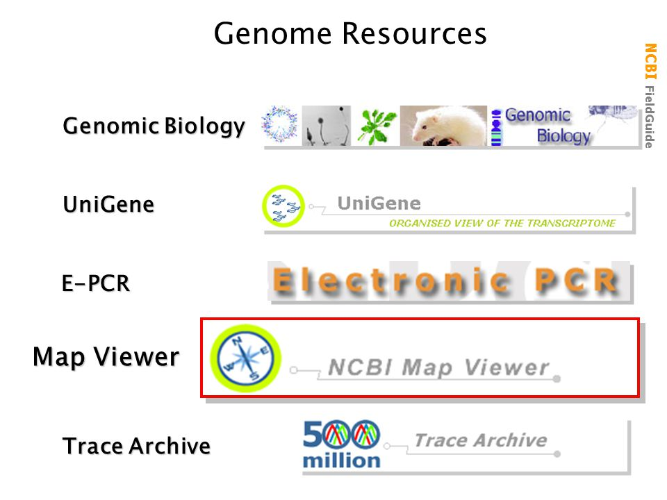 Genome Resources Map Viewer Genomic Biology UniGene E-PCR