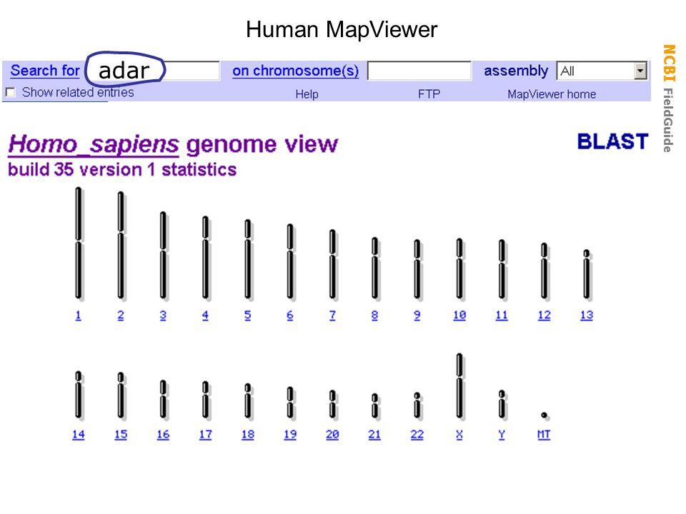 Human MapViewer adar