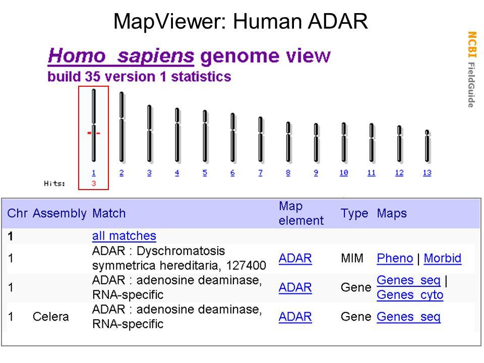 MapViewer: Human ADAR