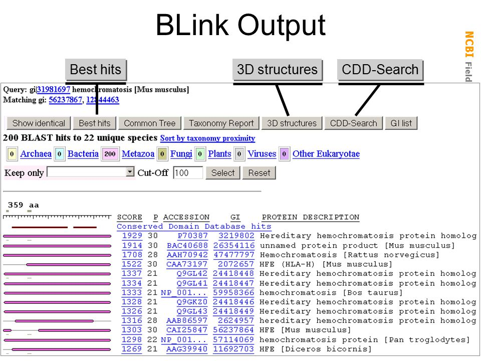 BLink Output Best hits 3D structures CDD-Search