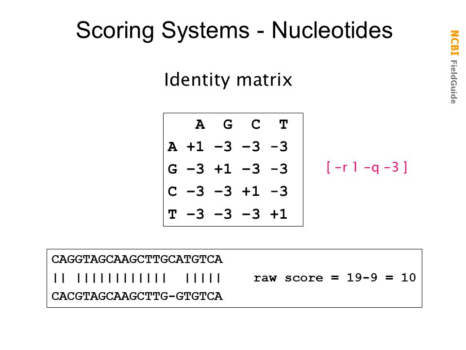 Scoring Systems - Nucleotides