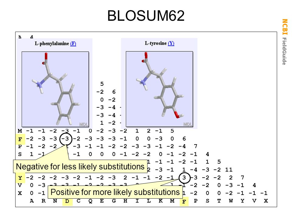 BLOSUM62 Negative for less likely substitutions