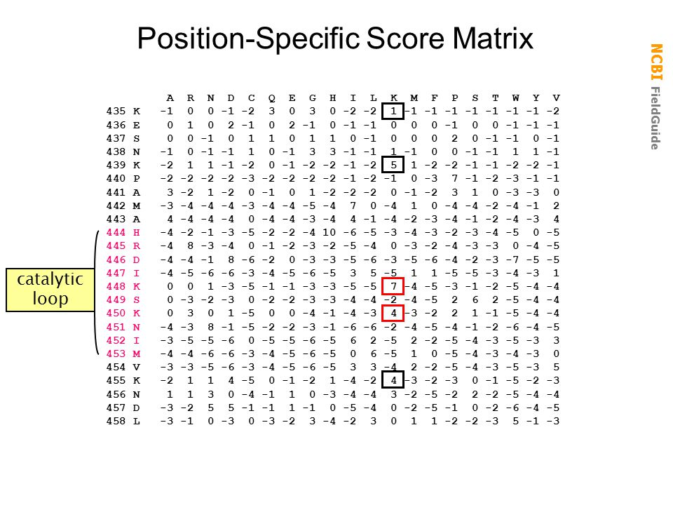 Position-Specific Score Matrix