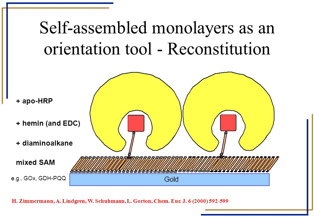 Self-assembled monolayers as an orientation tool - Reconstitution