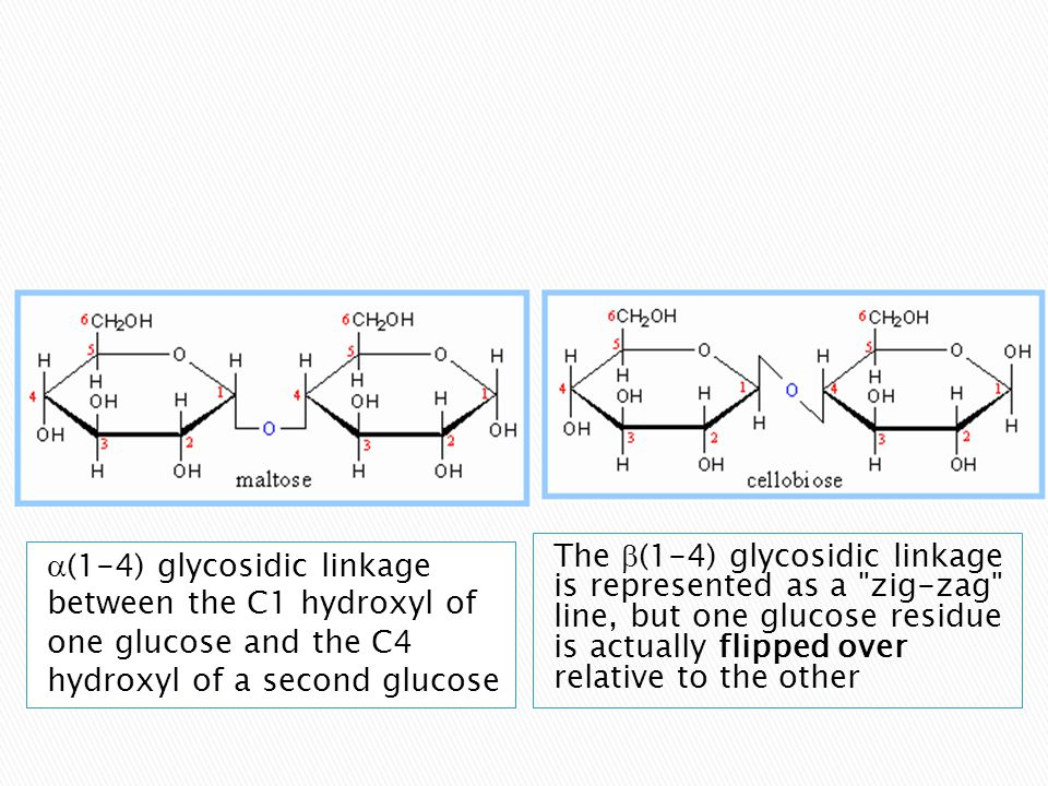 The b(1-4) glycosidic linkage is represented as a zig-zag line, but one glucose residue is actually flipped over relative to the other