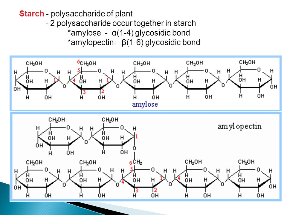 Starch - polysaccharide of plant