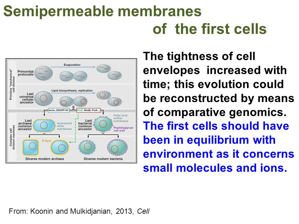 Semipermeable membranes of the first cells