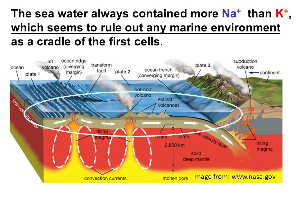 The sea water always contained more Na+ than K+, which seems to rule out any marine environment as a cradle of the first cells.