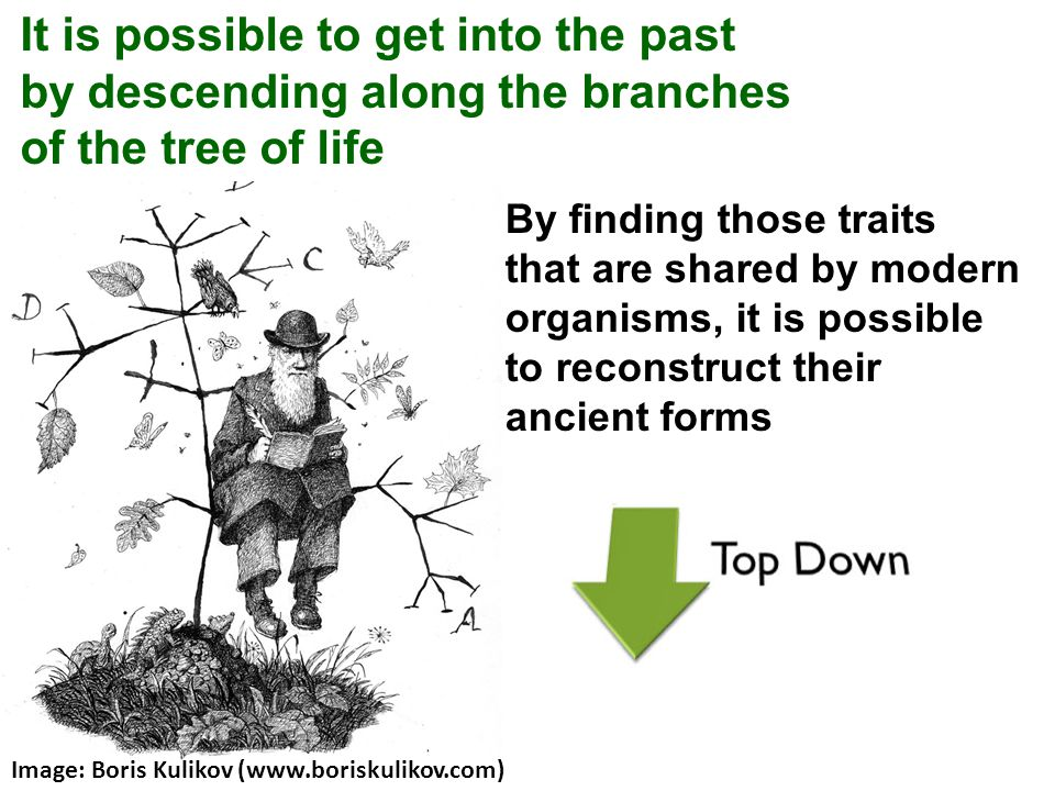 It is possible to get into the past by descending along the branches of the tree of life