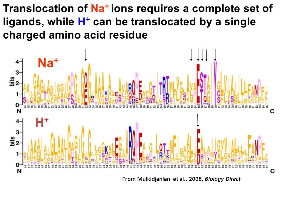 Translocation of Na+ ions requires a complete set of ligands, while H+ can be translocated by a single charged amino acid residue