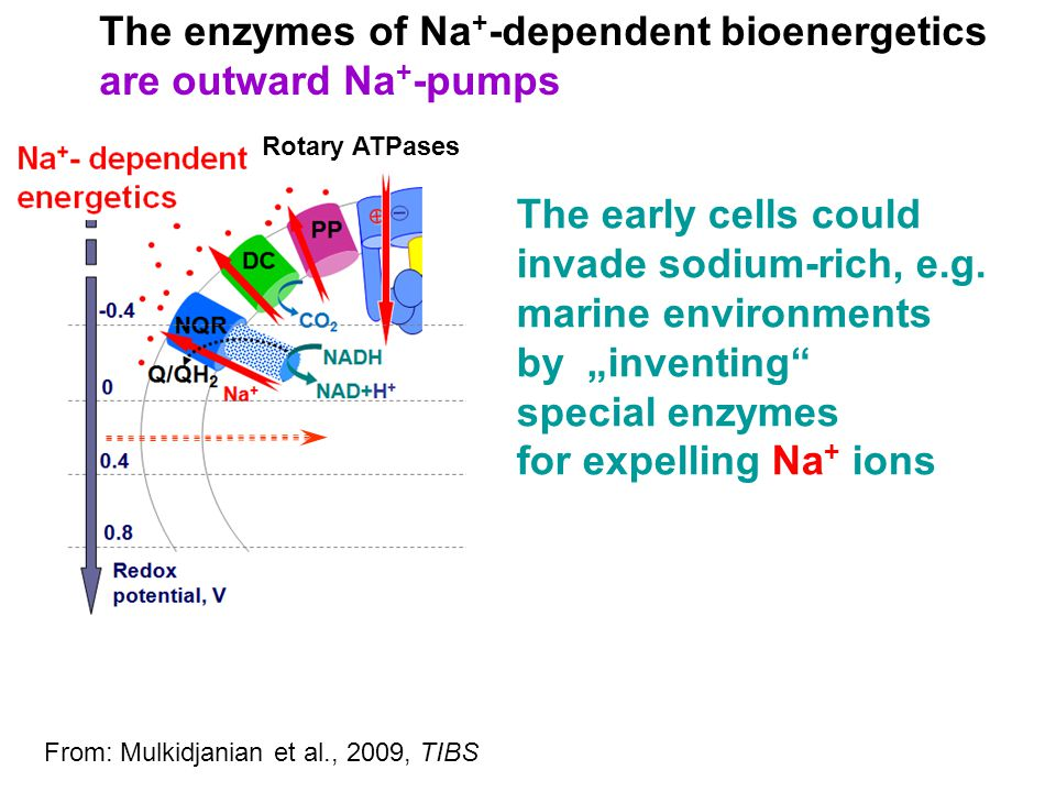 The enzymes of Na+-dependent bioenergetics are outward Na+-pumps