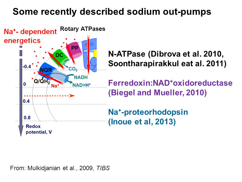 Some recently described sodium out-pumps