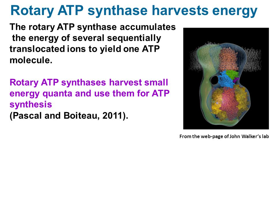 Rotary ATP synthase harvests energy