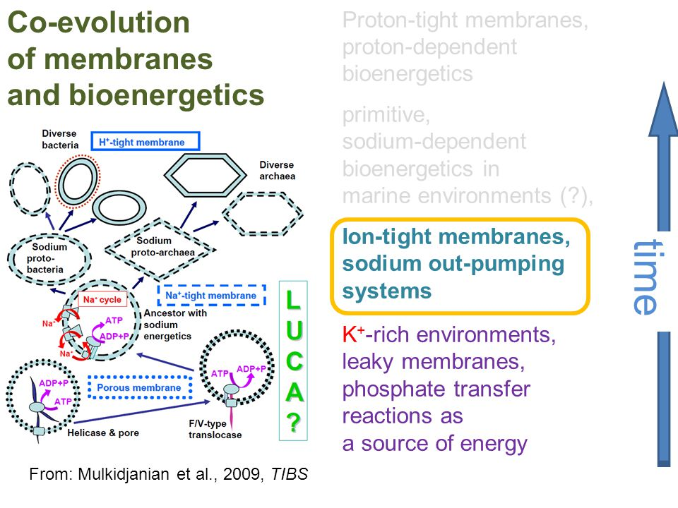 time Co-evolution of membranes and bioenergetics