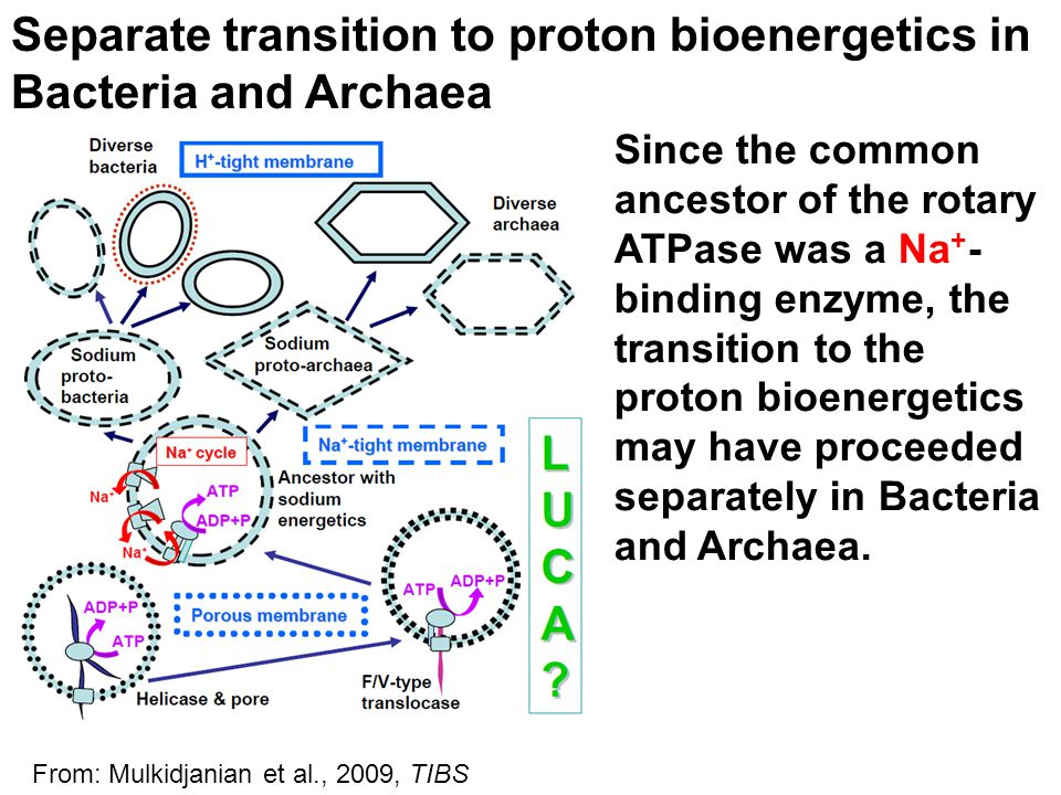 Separate transition to proton bioenergetics in Bacteria and Archaea