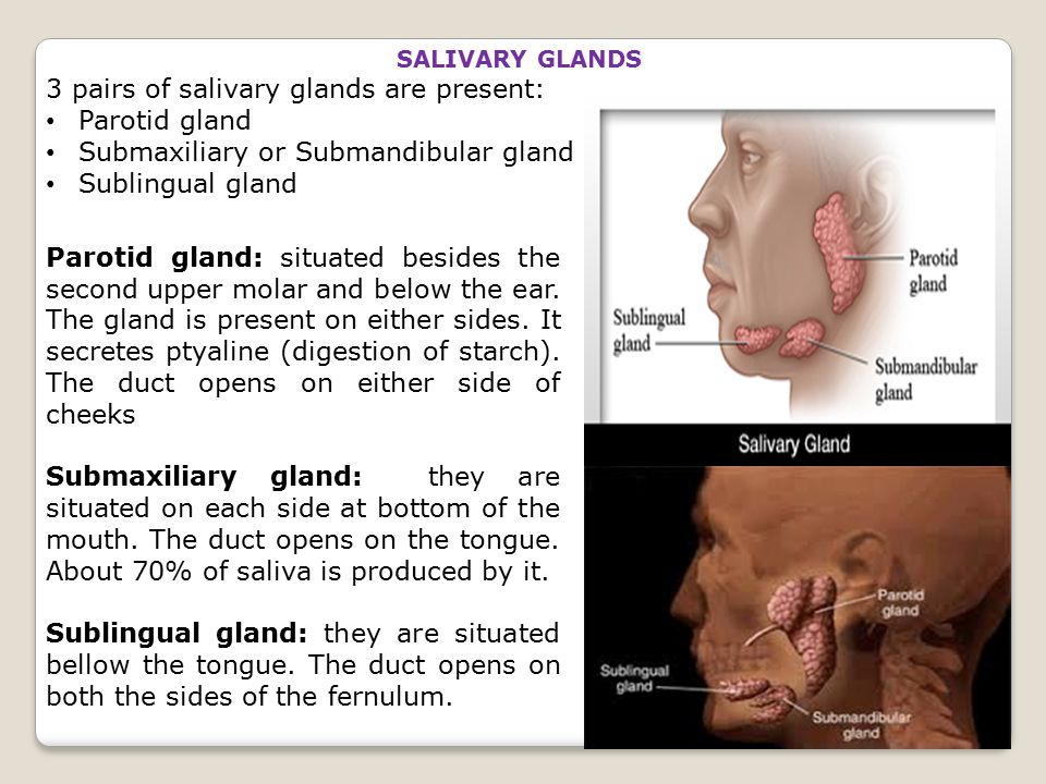 3 pairs of salivary glands are present: Parotid gland