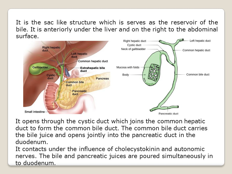 It is the sac like structure which is serves as the reservoir of the bile. It is anteriorly under the liver and on the right to the abdominal surface.