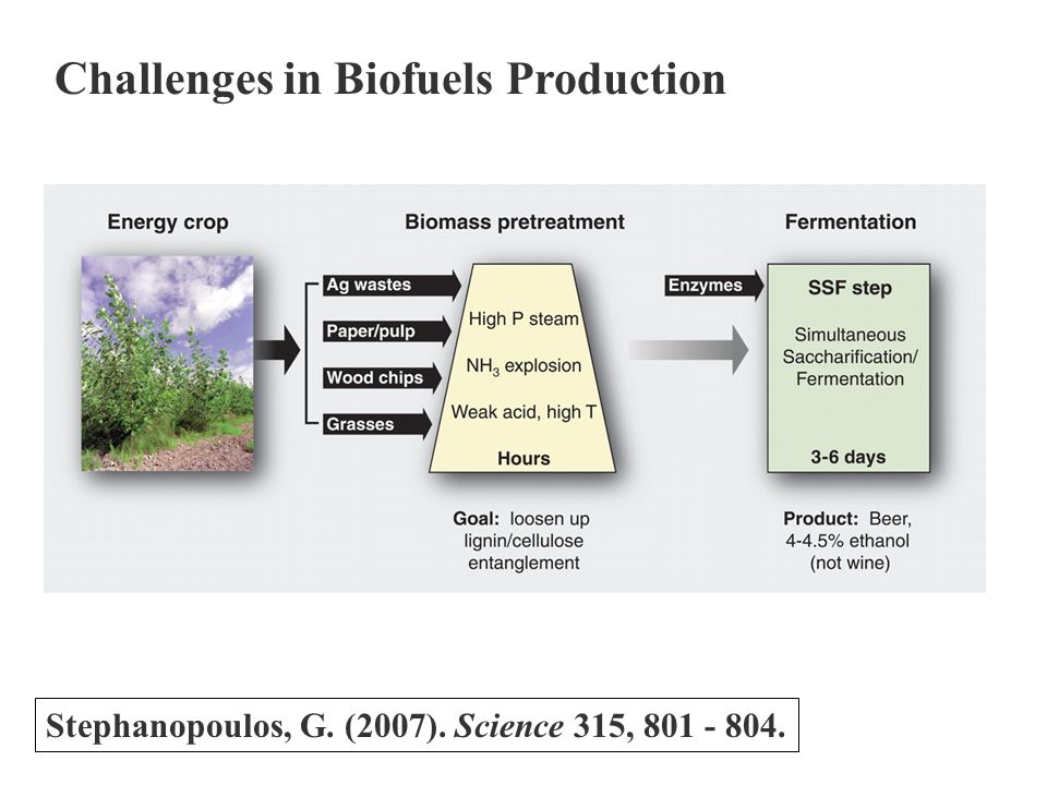 Challenges in Biofuels Production