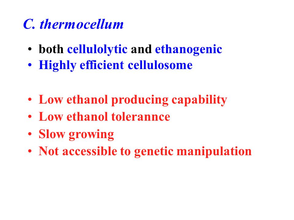 C. thermocellum both cellulolytic and ethanogenic