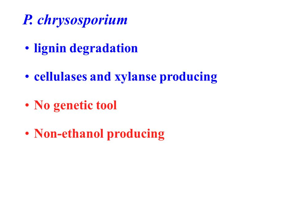 P. chrysosporium lignin degradation cellulases and xylanse producing