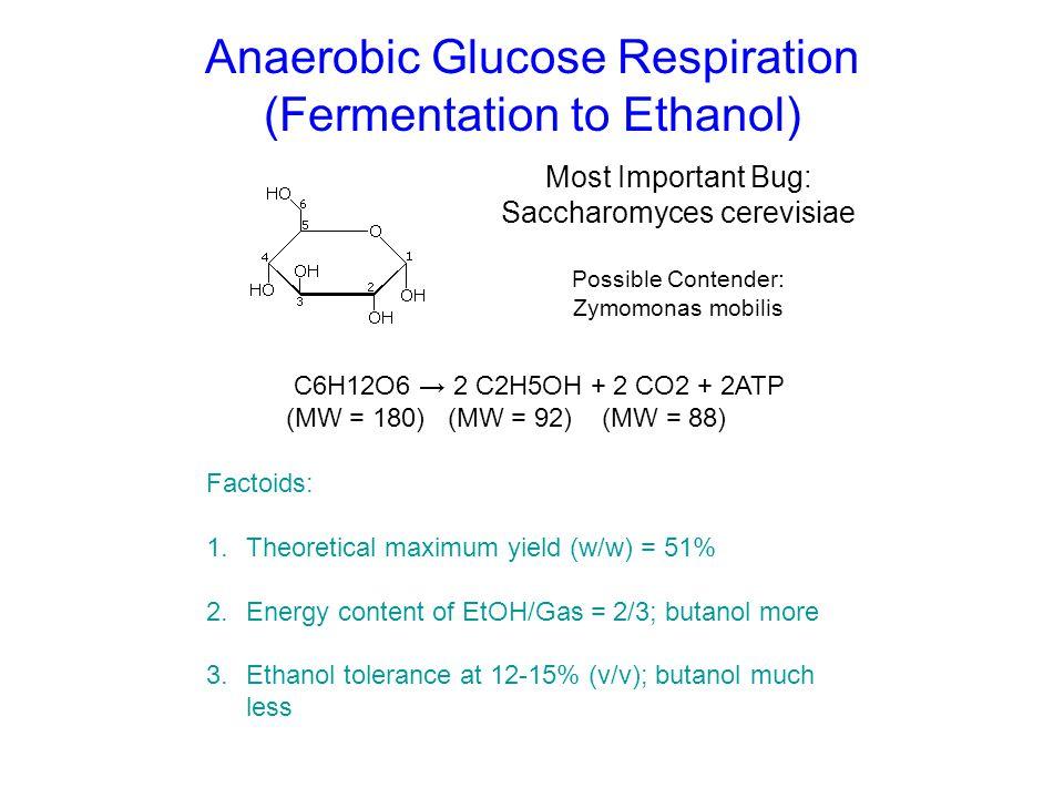 Anaerobic Glucose Respiration (Fermentation to Ethanol)