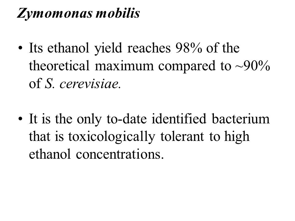 Zymomonas mobilis Its ethanol yield reaches 98% of the theoretical maximum compared to ~90% of S. cerevisiae.