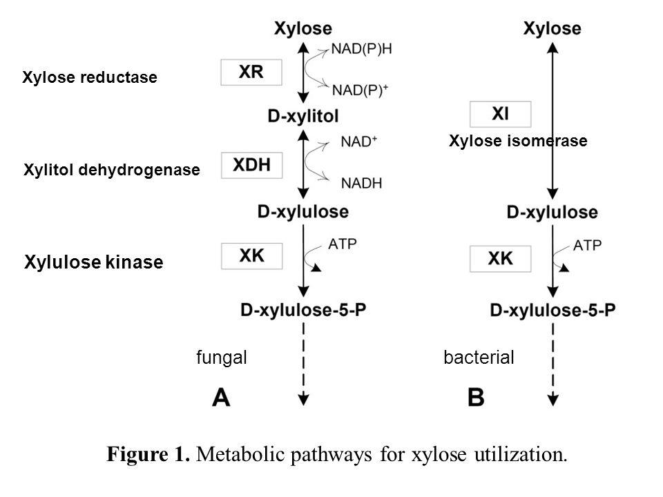 Figure 1. Metabolic pathways for xylose utilization.