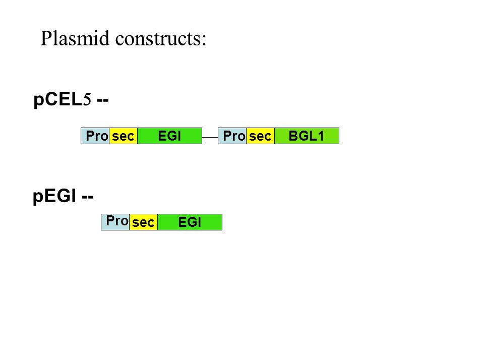 Plasmid constructs: pCEL5 -- pEGI -- Pro sec EGI Pro sec BGL1 Pro sec