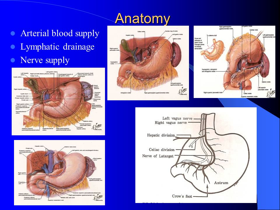 Gastric And Duodenal Ulcer Disease Ppt Video Online Download