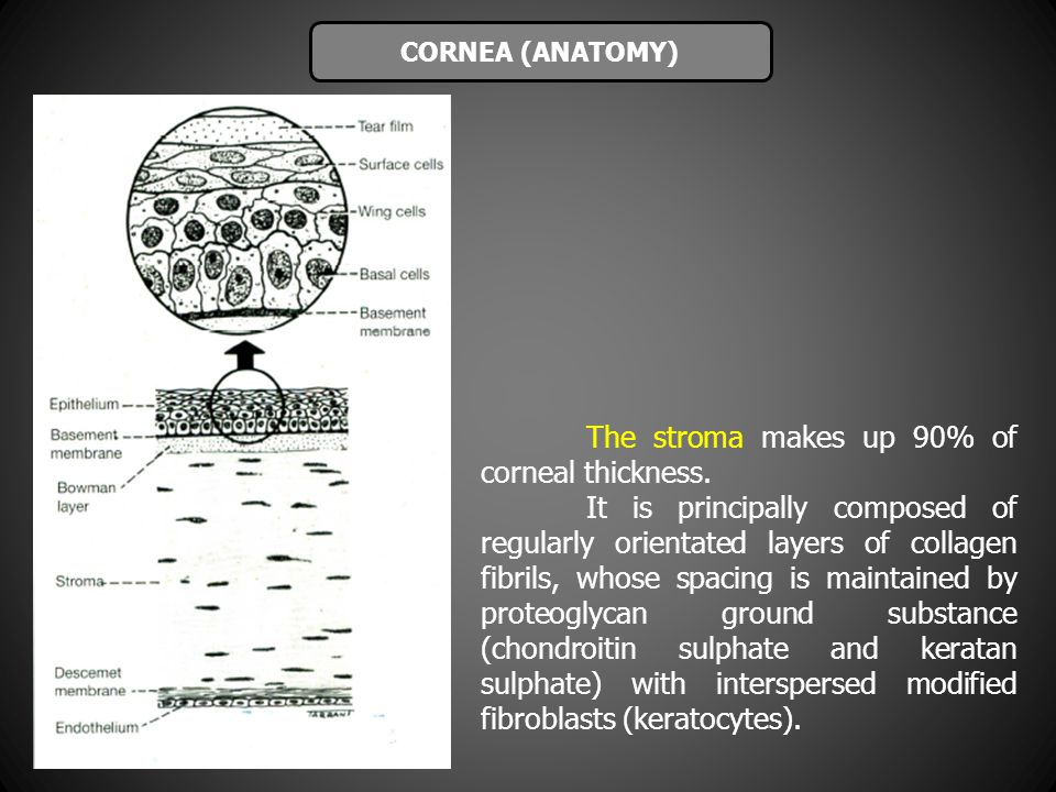 The stroma makes up 90% of corneal thickness.