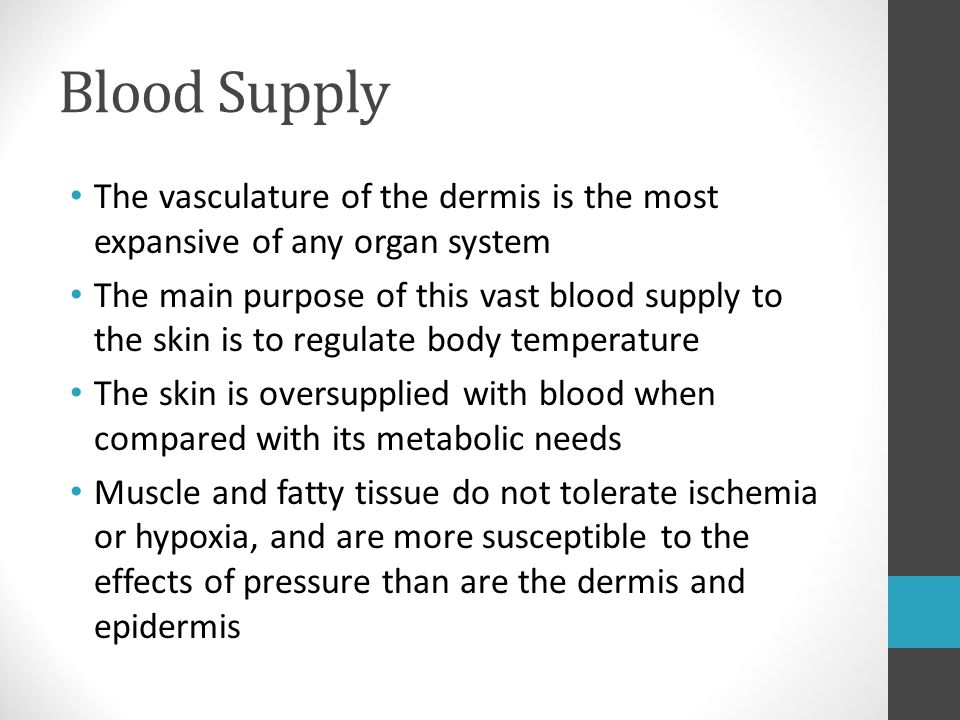 Blood Supply The vasculature of the dermis is the most expansive of any organ system.