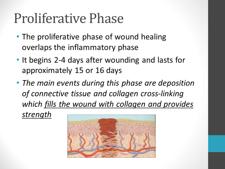 Proliferative Phase The proliferative phase of wound healing overlaps the inflammatory phase.