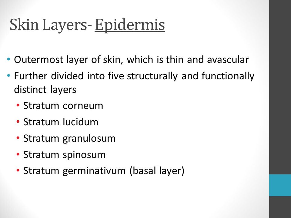Skin Layers- Epidermis