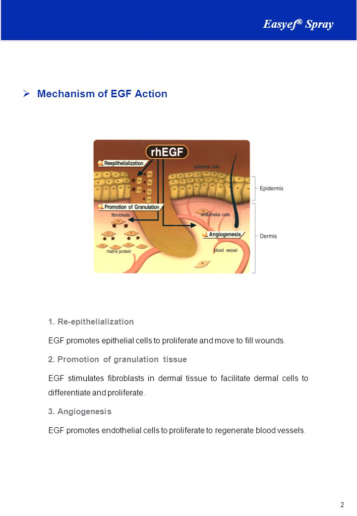 Easyef® Spray Mechanism of EGF Action 1. Re-epithelialization