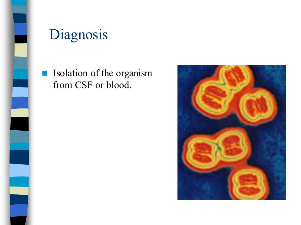 Diagnosis Isolation of the organism from CSF or blood.