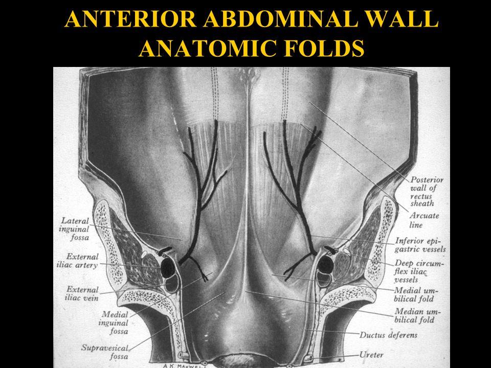 ANTERIOR ABDOMINAL WALL ANATOMIC FOLDS