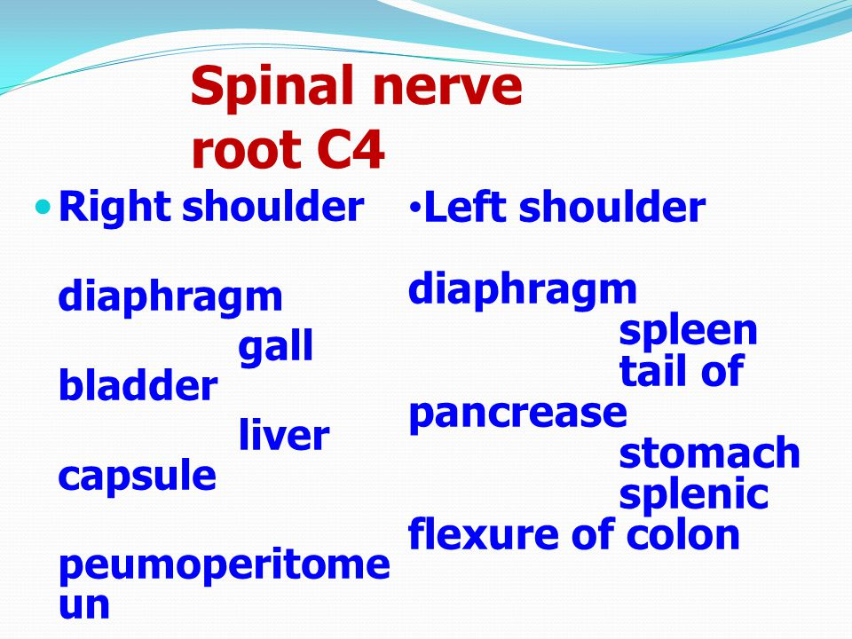 Spinal nerve root C4 Left shoulder diaphragm spleen tail of pancrease