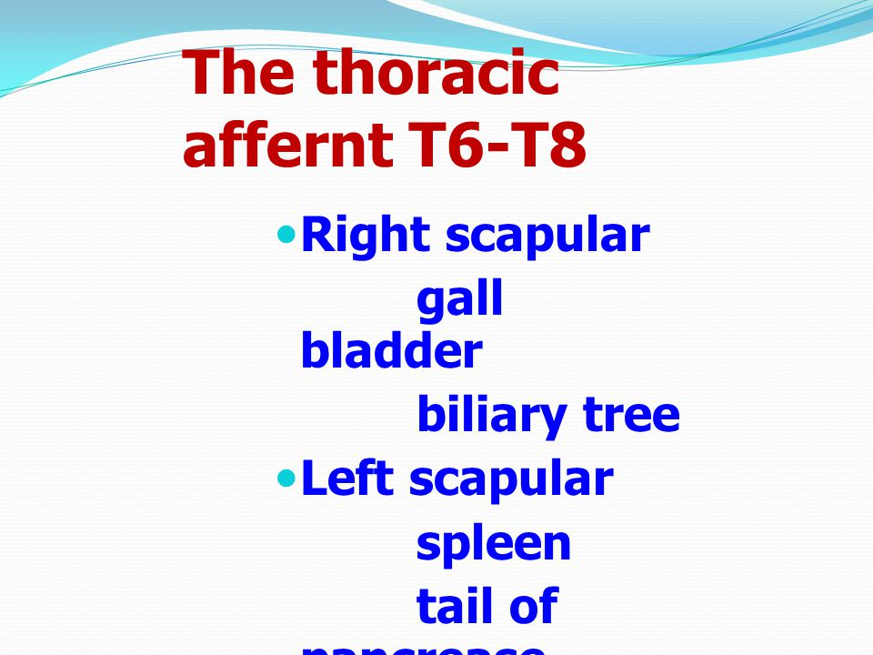 The thoracic affernt T6-T8