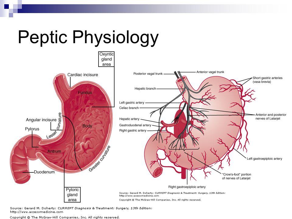 Peptic Physiology