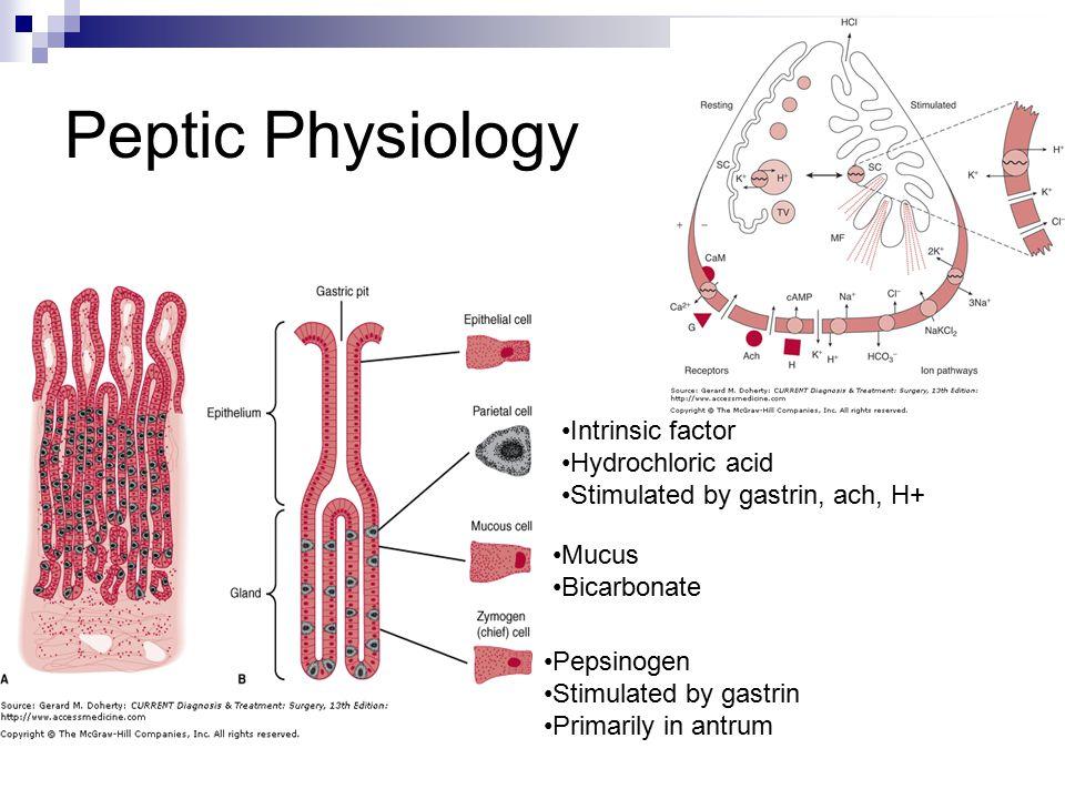 Peptic Physiology Intrinsic factor Hydrochloric acid