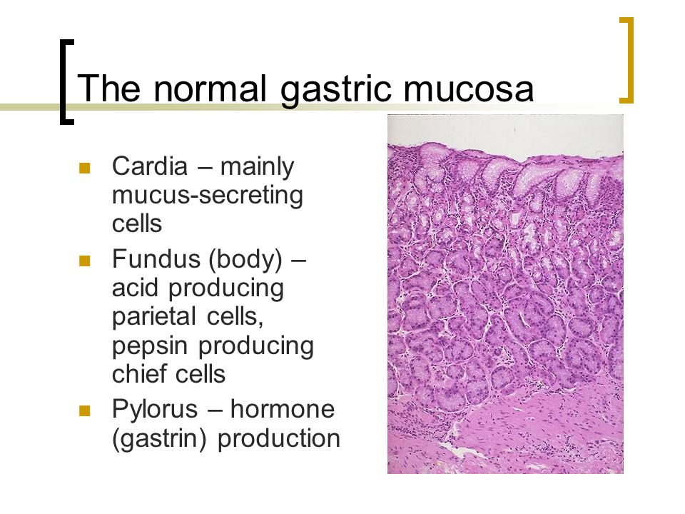 The normal gastric mucosa