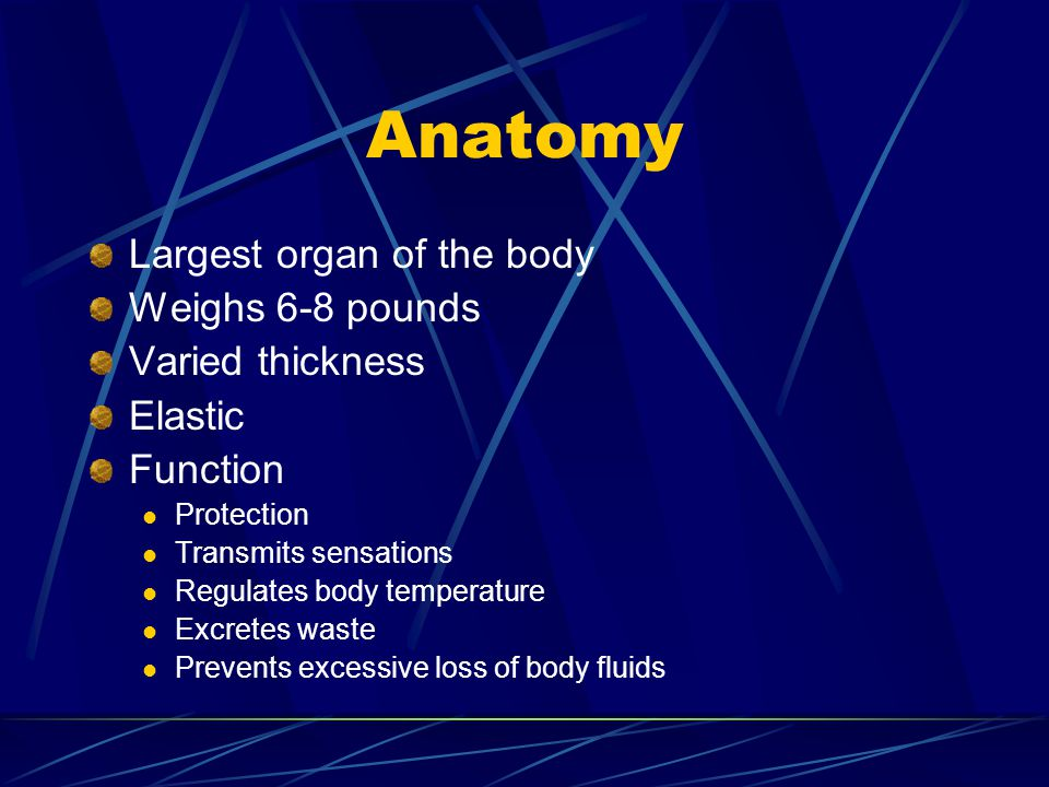 Anatomy Largest organ of the body Weighs 6-8 pounds Varied thickness
