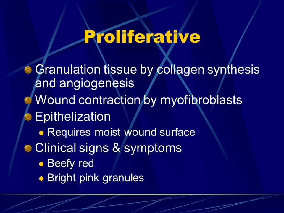 Proliferative Granulation tissue by collagen synthesis and angiogenesis. Wound contraction by myofibroblasts.